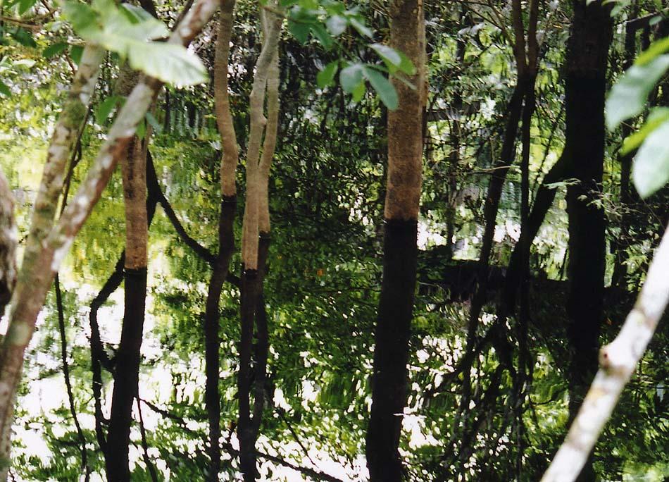 http://www.beautiful-nature.net/travels/0408-n.jpg