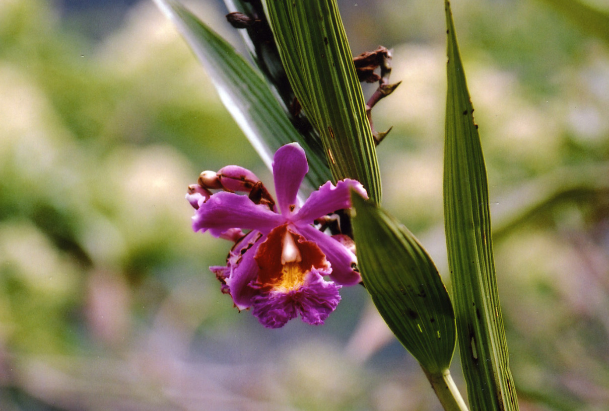 http://www.beautiful-nature.net/travels/0608A.jpg