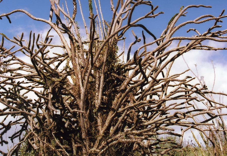 http://www.beautiful-nature.net/travels/0707-n.jpg