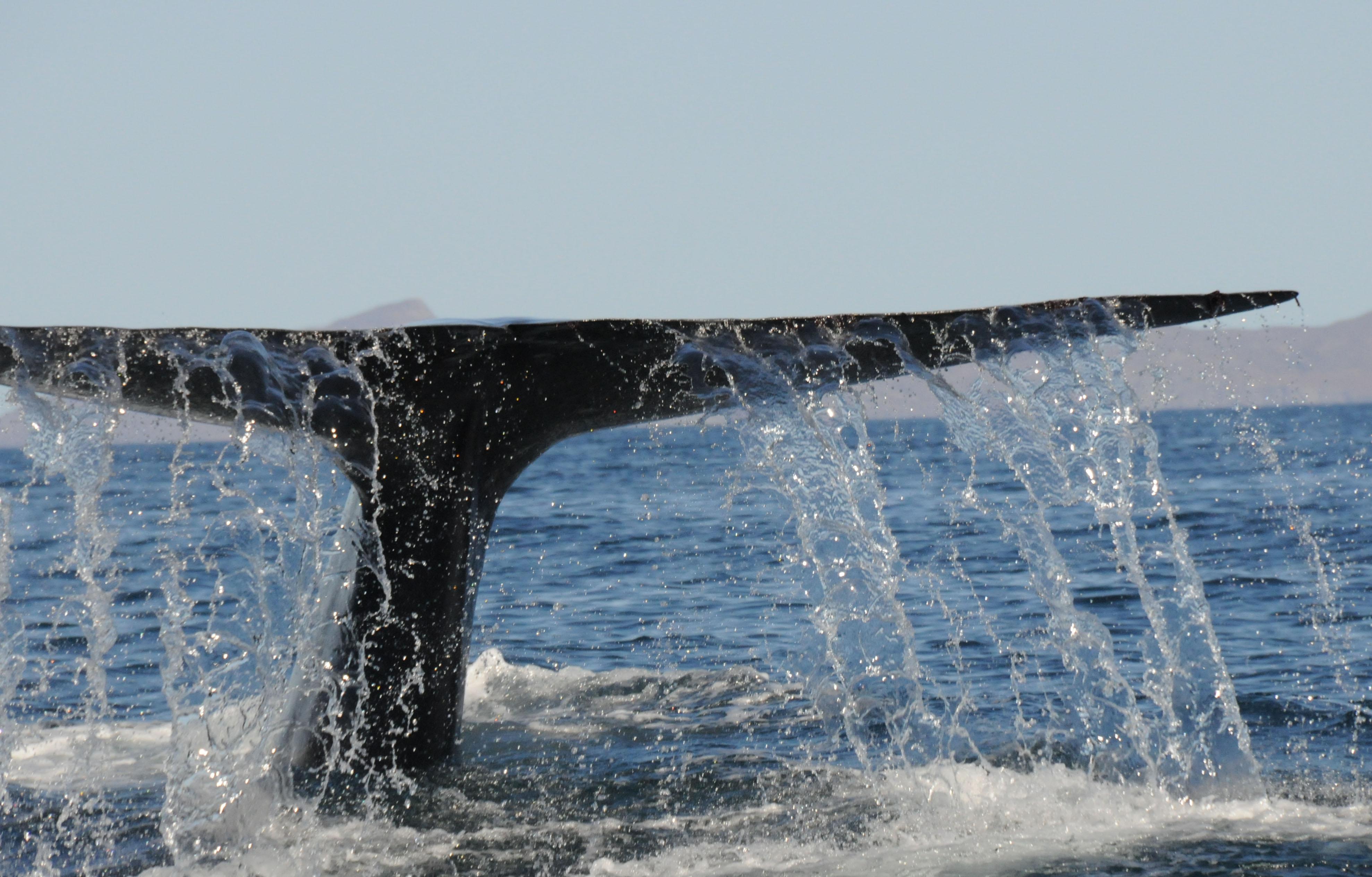 http://www.beautiful-nature.net/travels/DSC_0053-1-3.jpg