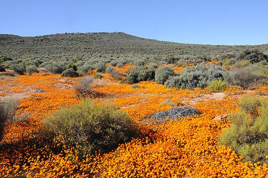 http://www.beautiful-nature.net/travels/bn22.jpg