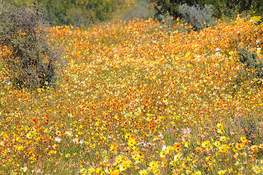 http://www.beautiful-nature.net/travels/bn27a.jpg